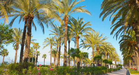 Salou palm trees promenade, Spain
