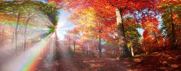 Keuken foto achterwand Zalm Autumn forest in Ukraine