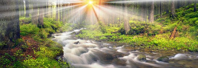 Printed kitchen splashbacks Forest river Prut river in the wild forest