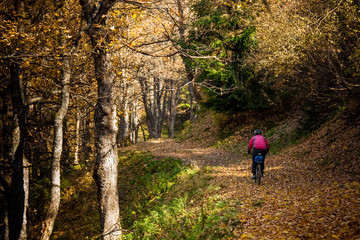 Mountain biker in autumn forest