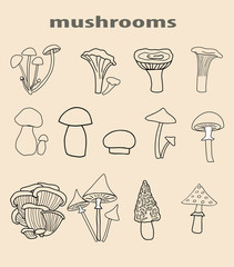 big set of painted vector mushrooms