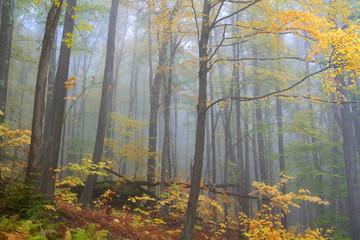 Foggy autumn morning in Pennsylvania