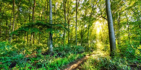 Wall Murals Forest Herbstlicher Wald mit goldener Sonne