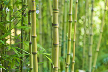 canvas print motiv - enjoynz : Green bamboo nature backgrounds