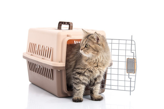 cat ponibcctyc vk pet carrier isolated on white background