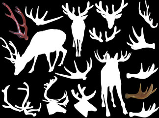 set of horned animals and antlers isolated on black