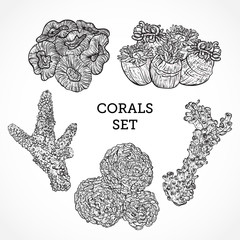 Collection of marine plants and corals. Vintage set of black and white hand drawn marine flora. Isolated vector illustration in line art style.Design for summer beach, decorations.