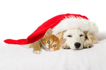 Christmas labrador puppy and kitten sleeping