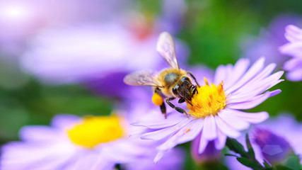 Photo sur Aluminium Bee Bee on the flower
