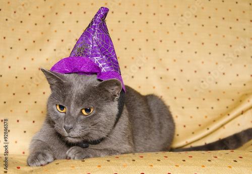 Cartolina Dauguri Di Buon Compleanno Animali Vestiti A Festa