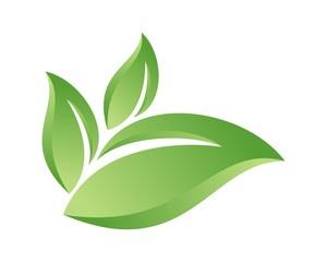 green grown leaf v.3