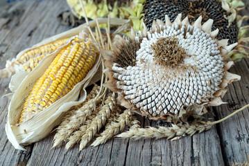 Wall Mural - Buğday,mısır ve ayçiçeği