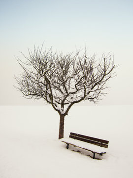 wonderful winter landscape 8, apple tree and bench