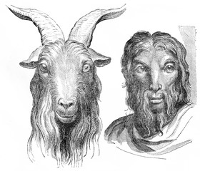 Goat, vintage engraving.