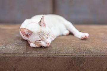 A beautiful cat lie down on a sofa.