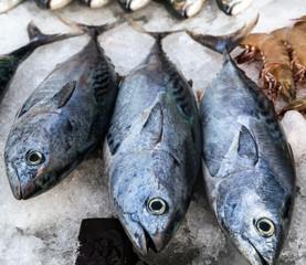 frozen tuna fish ice sea market