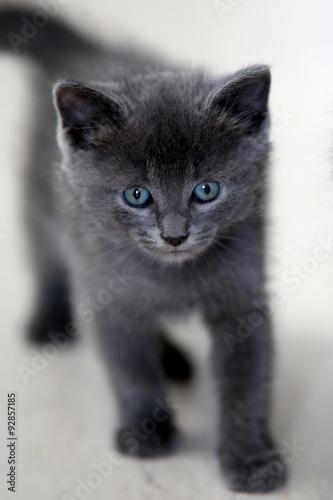katzenbaby grau blaue augen stockfotos und lizenzfreie. Black Bedroom Furniture Sets. Home Design Ideas