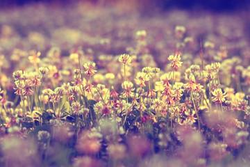 Foto op Plexiglas Lavendel summer landscape background sun flowers Rays