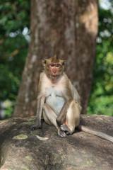 Portrait of cute flirting female monkey