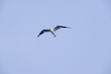 The image of seagull