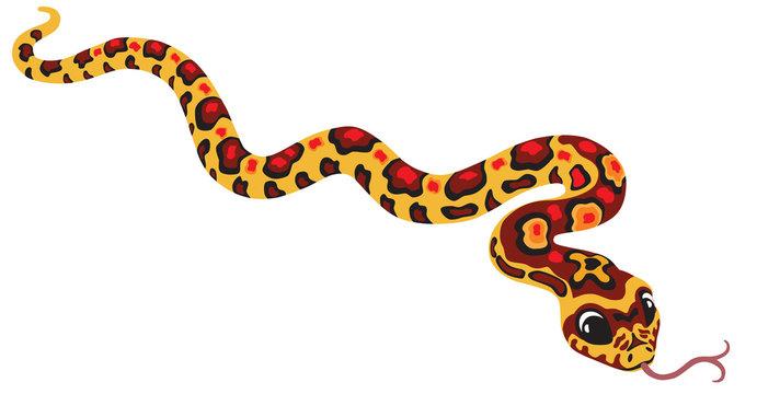 cartoon corn snake isolated on white