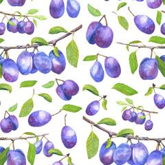 Watercolor hand drawn plum branch
