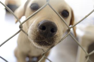 Fototapeta Shelter Dog obraz