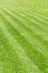 Natural green grass field background, fresh cut