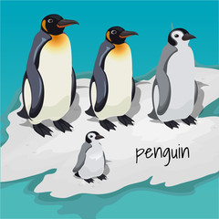 Three big penguins and one little penguin