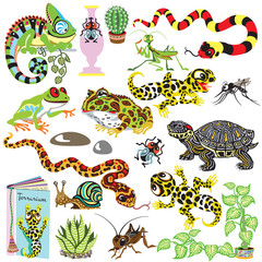 cartoon set with reptiles ,amphibians and insects . Animals of terrarium isolated on white