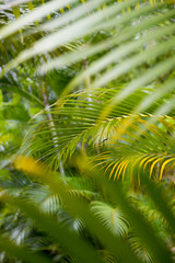 Jungle background of vibrant green layered palm fronds