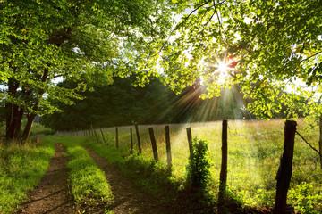 Forest with Sun Rays, Shadows and Fog.