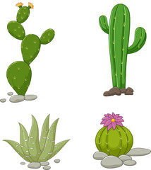 Collection of cactus illustration