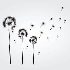 Background with the dandelions
