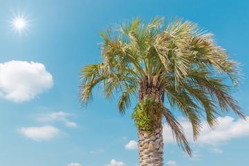 Single palm in daylight against blue sky.