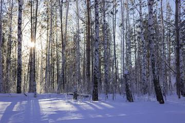 Берёзы зимой на Царёвом Кургане.