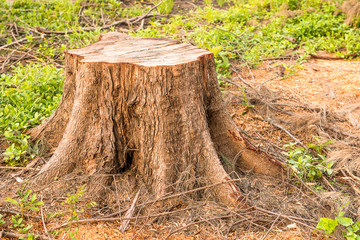 cutting died of tree root