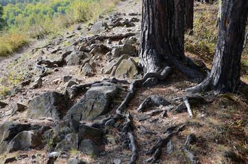 Tree on a mountain trail