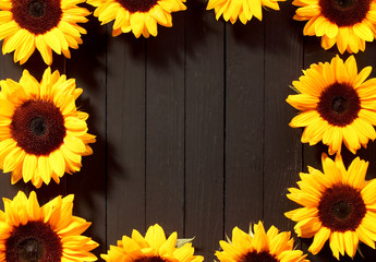 Frame of colorful yellow sunflowers