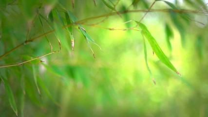 Fotoväggar - Bamboo forest. Growing bamboo border design