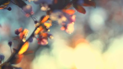 Klistermärke - Spring flowers. Beautiful orchard. Abstract blurred background