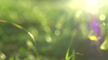 Fotoväggar - Nature background. Beautiful sun shine through the green fresh grass