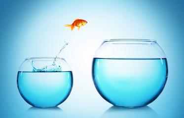 Goldfish jumping from glass aquarium, on blue background