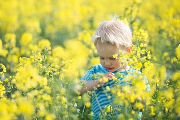 Portrait of a boy standing in yellow flower field