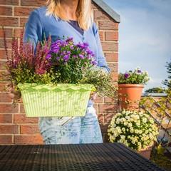 Foto: Frau mit Herbstbepflanzung auf dem Balkon
