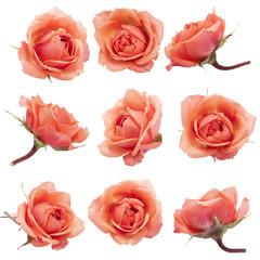 Collage met rozen.