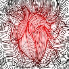 Human heart 2