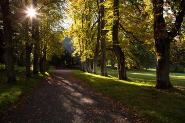 Licht im Herbstwald