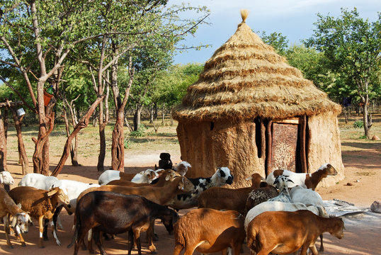 Himba village with traditional african hut and goats near Etosha National Park in Namibia, Africa