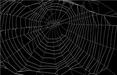 silhouette spiderweb